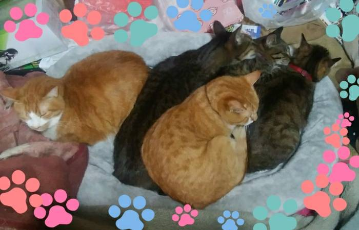 ピータに乗られても爆睡するアグネス家の猫達