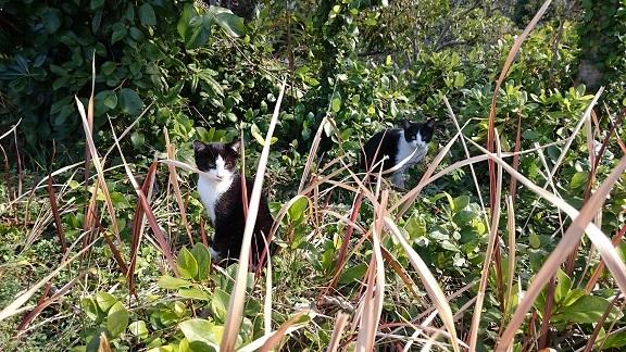 美和ちゃん1月21日、約1ヶ月ぶりにお母さん猫と一緒に元気な姿を見せてくれた松山総合公園の2匹の白黒子猫ちゃん手前治療をした子猫ちゃん奥警戒心の強い子猫ちゃん