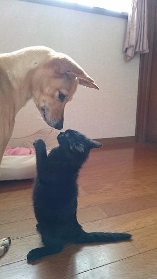 美和ちゃんマリリンにじゃれる黒子猫ちゃん