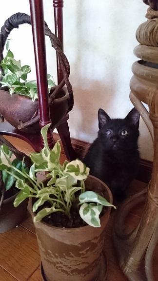 美和ちゃん隔離部屋から解放され、ますますヤンチャな黒子猫ちゃん