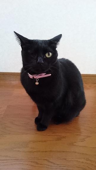 美和ちゃん黒子猫ちゃんの存在が気になってソワソワしている、片目のらん丸