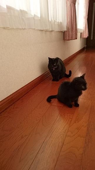 美和ちゃん手前らん丸に睨まれてもどこ吹く風の黒子猫ちゃん奥黒子猫ちゃんの存在が気になって仕方ない片目のらん丸