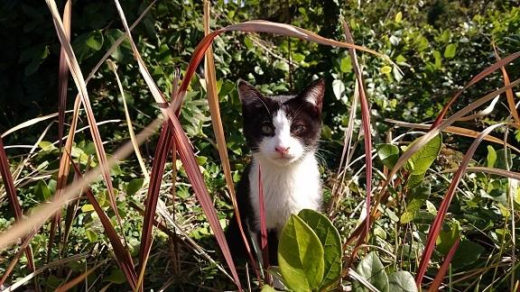 美和ちゃん松山総合公園の治療をした白黒子猫ちゃんに久しぶりに会えました(=^ェ^=)大きくなっていました