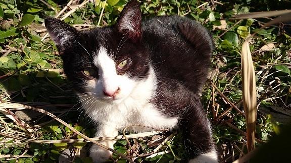 美和ちゃん松山総合公園の治療をした白黒子猫ちゃんに久しぶりに会えました大きくなっていました