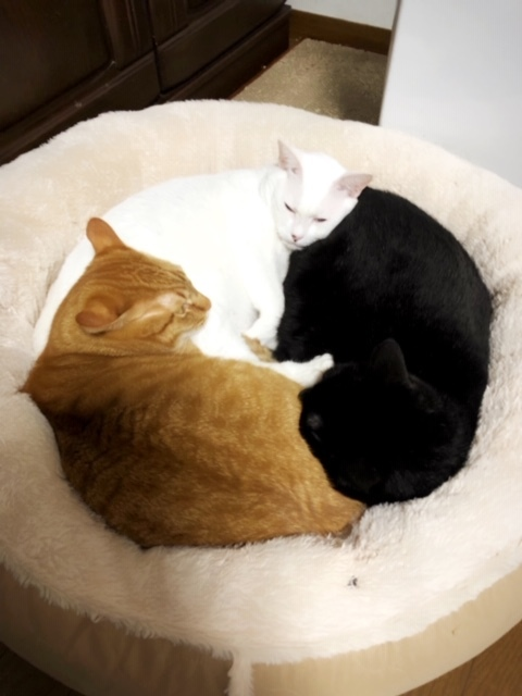 猫団子〜✨💖✨