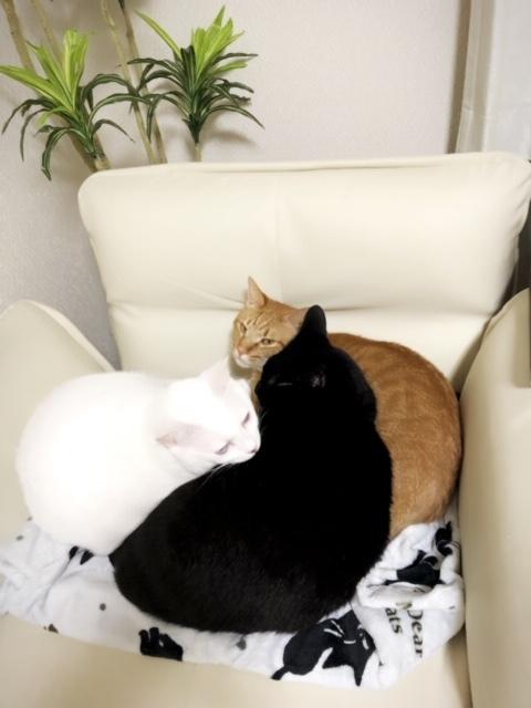 猫団子〜Part2✨😍✨