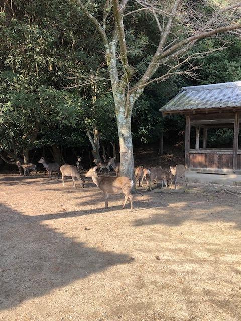 杉之浦神社6 2019