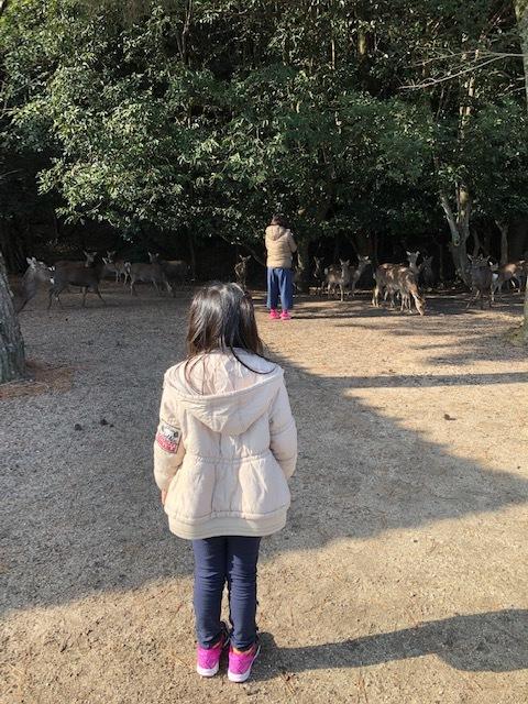杉之浦神社のらぶちゃん 2019