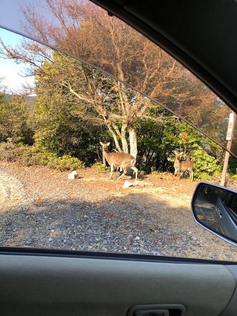 入浜山の鹿 2019