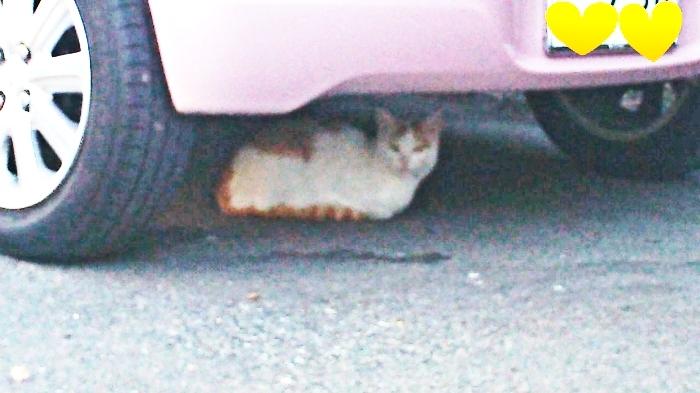 車の下で休んでいる猫①