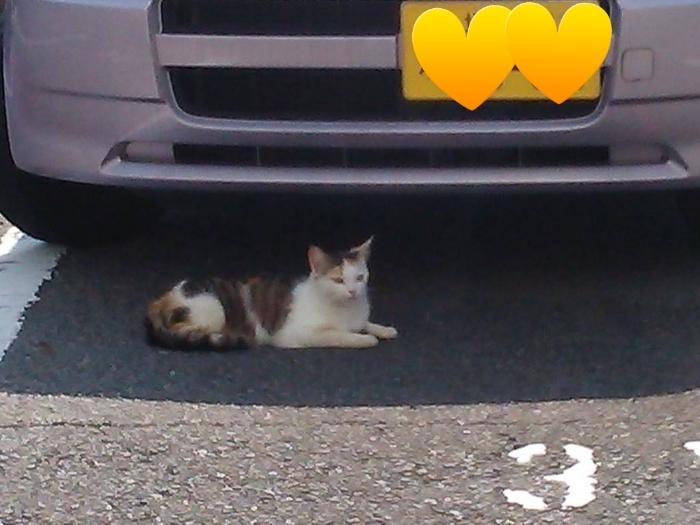 車の下で休んでいる猫②