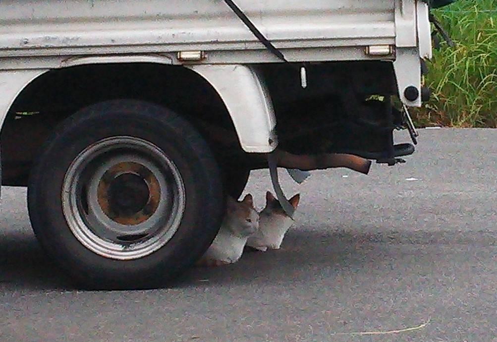 車の下で休んでいる猫③