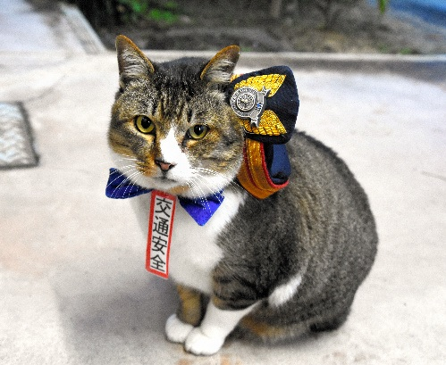 JR志和口駅の「りょうま駅長」1交通安全イベントでも活躍している