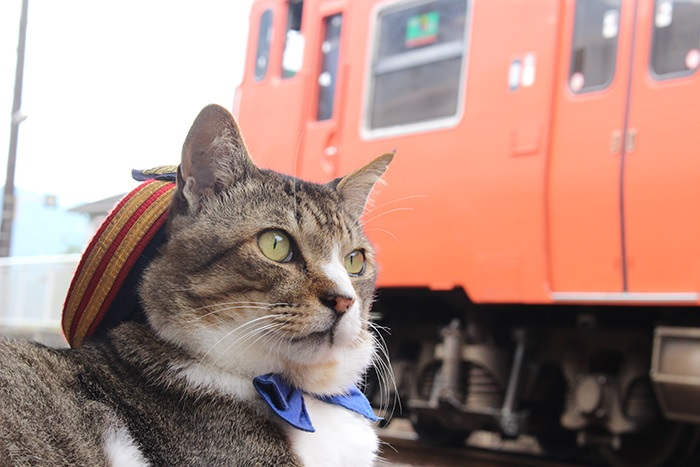 JR志和口駅の「りょうま駅長」6キリリッとしているりょうま駅長