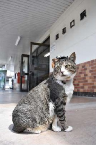 JR志和口駅の「りょうま駅長」14