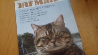 JAF 猫と小諸