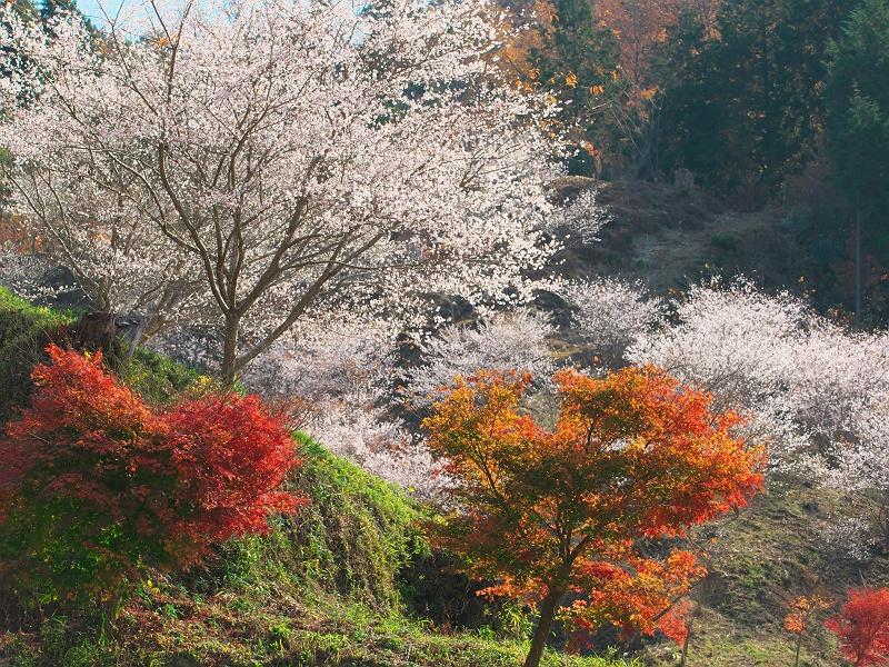 晩秋の松月寺