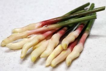 寿司ガリ4