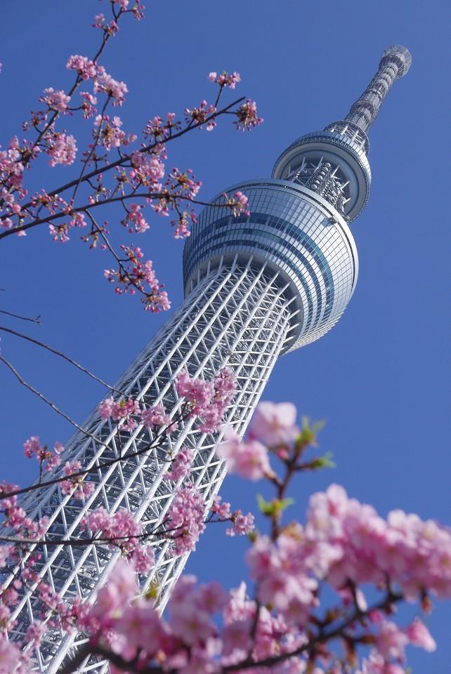 tokyo2018020.jpg