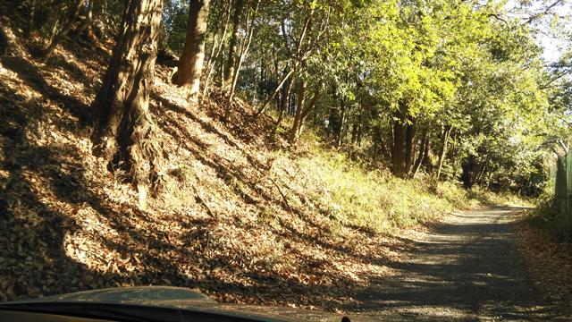 狭山湖周遊道路を行く