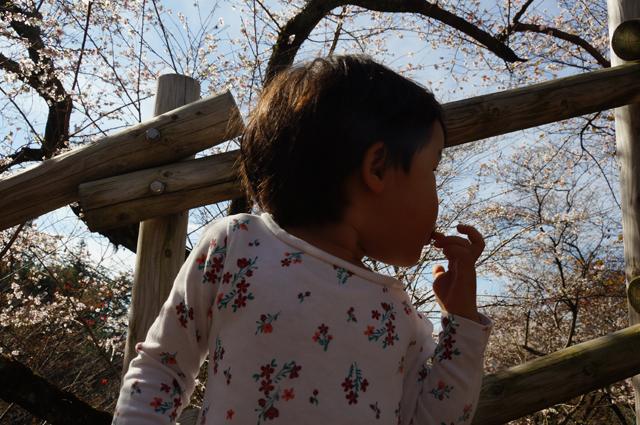 バックは四季桜