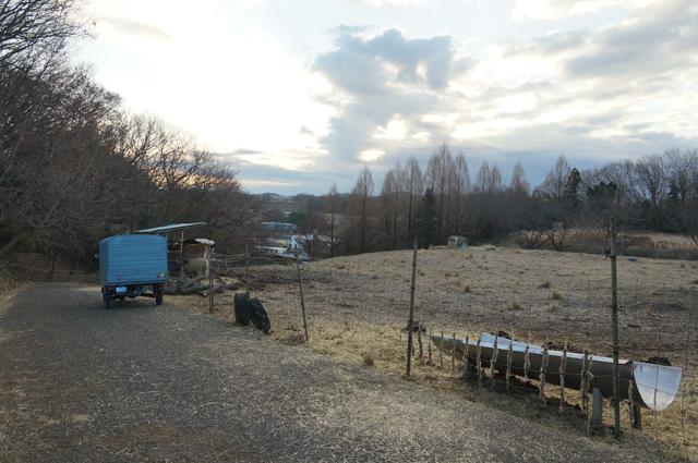 磯沼牧場放牧地の朝