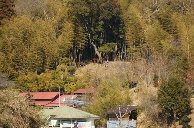 小山田緑地の向こう側に見える鳥居