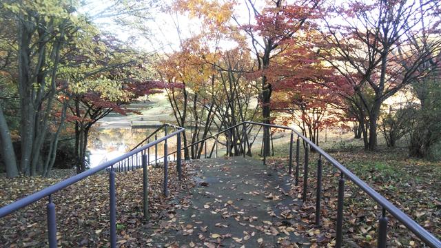 落葉の舞う道