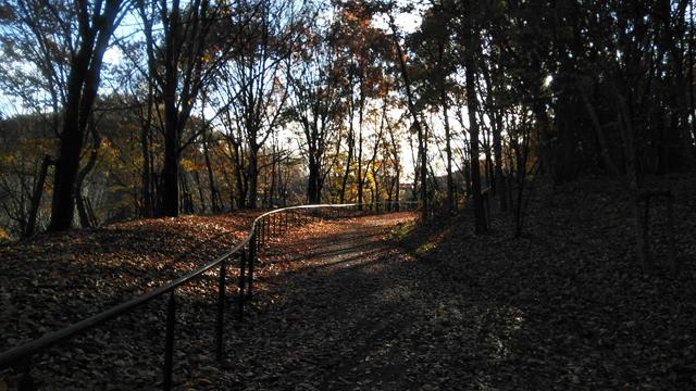 落葉は敷き詰められた道