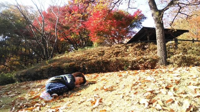 多摩丘陵の紅葉