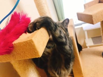 猫じゃらしにアタック