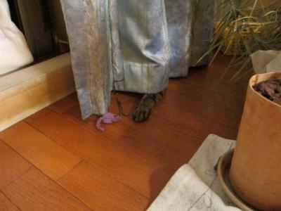 カーテンの下から手探り