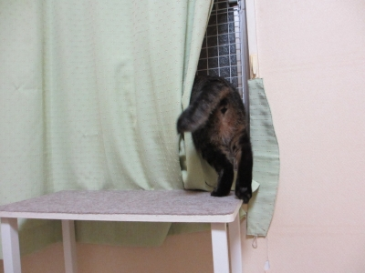 カーテンの後ろへ