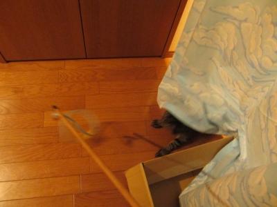 廊下のカーテンの下で