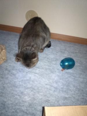 青卵とレム