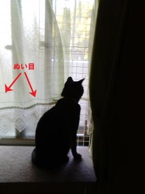 繕ったカーテンから窓を見る