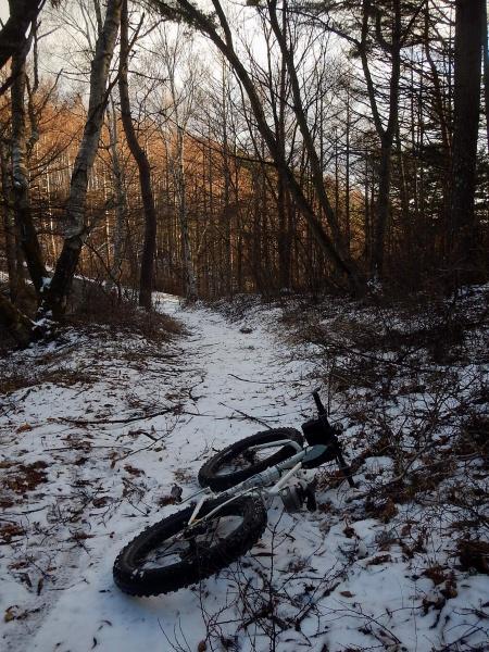 Pugsley in winter