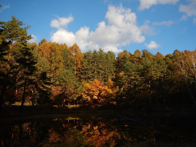 Cryspy autumn with pugsley