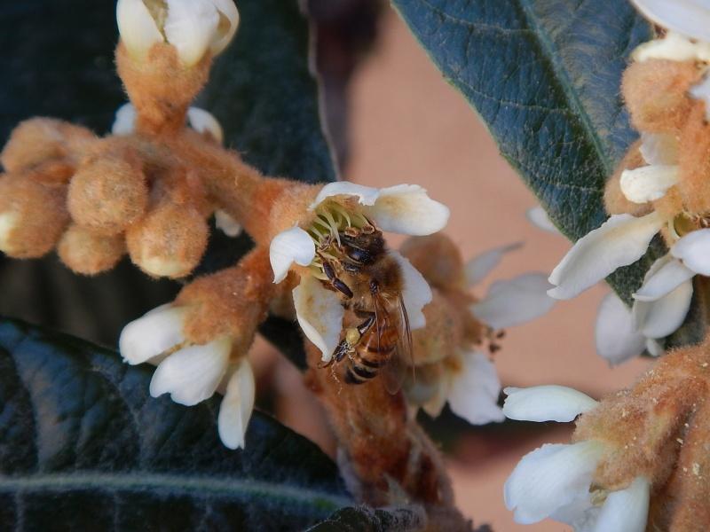Biwa and a bee