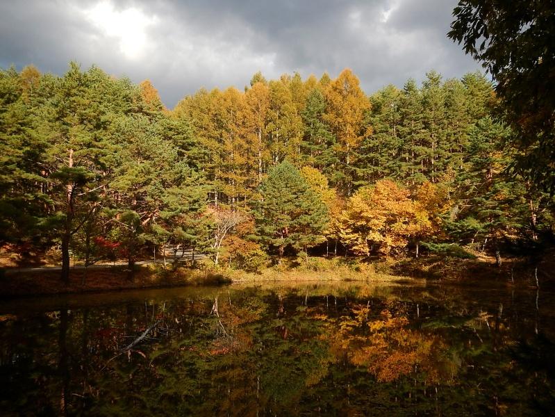 Pugsley in Autumn