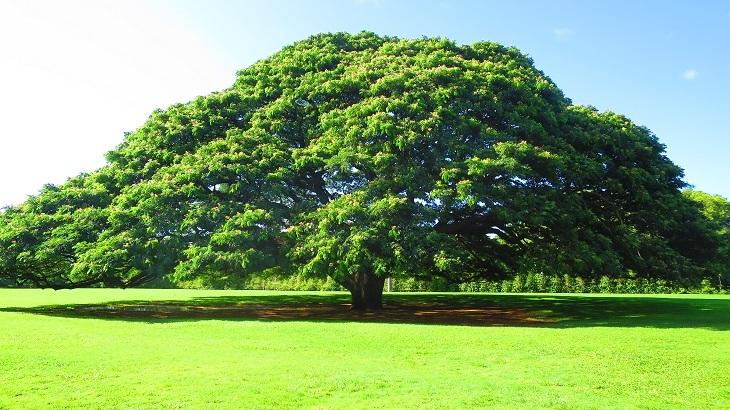 IMG_5970この木なんの木