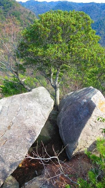 IMG_6632岩小屋