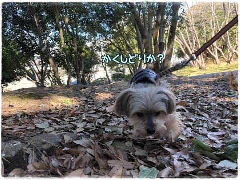 洋光台公園④