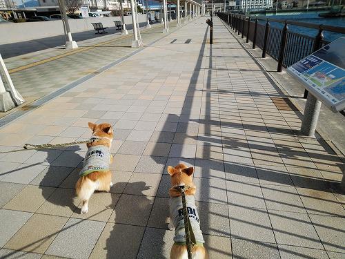 海側お散歩~