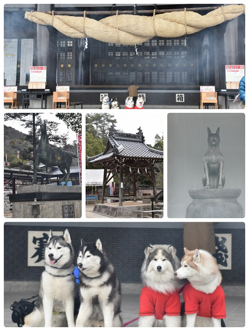 collage_photocat310212-1.jpg