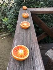 オレンジの餌