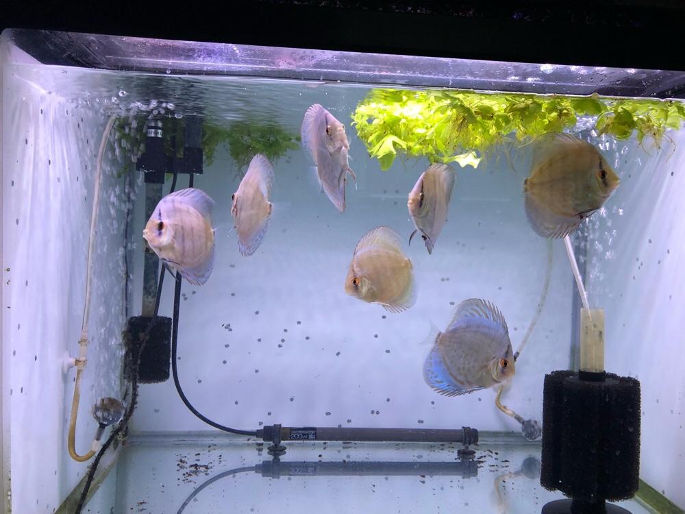 幼魚4ヵ月+オマケ付き