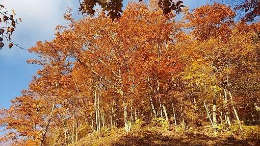 甲府幕岩の紅葉