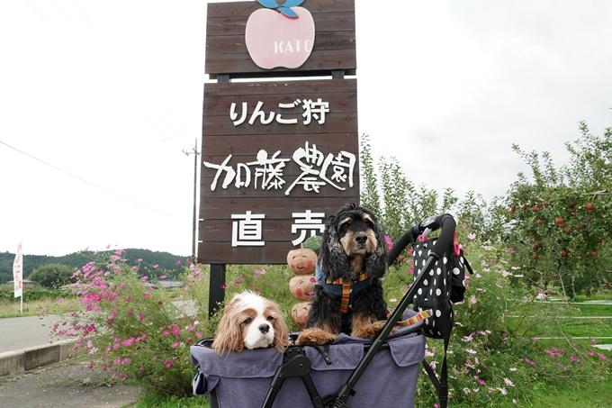 blogDSC07428.jpg