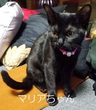 マリアちゃん 黒猫